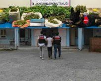 PERVARİ'DE BAHÇESİNDE UYUŞTURUCU YETİŞTİREN ZANLI YAKALANDI