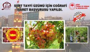 SİİRT 'TAYFİ ÜZÜMÜ' İÇİN COĞRAFİ İŞARET BAŞVURUSU YAPILDI