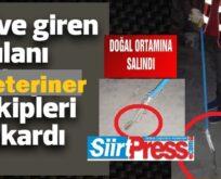 SİİRT'TE EVE GİREN YILANI VETERİNER EKİPLERİ ÇIKARTTI!..